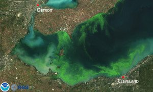 This satellite image shows Lake Erie's record-setting 2011 bloom, which affected more than half of the lake's shores.