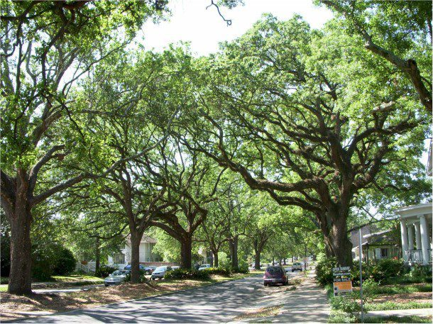 The city of Baton Rouge, La., uses a mobile app to capture data about trees on public property, including power-line dangers.
