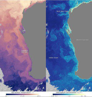 Though invisible to the naked eye, the warm current stands out in measurements of the temperature of the ocean's surface, as shown in the left image acquired by NASA's Aqua satellite on June 6, 2014. Warmer water is orange and pink, while cooler water is purple. In the right image of ocean chlorophyll, however, the ocean is clearly in full bloom. Acquired on June 6, 2014, by the Aqua satellite, the image shows high concentrations of chlorophyll in yellow and lower concentrations in blue. The highest concentrations are aligned with the warmest parts of the current.