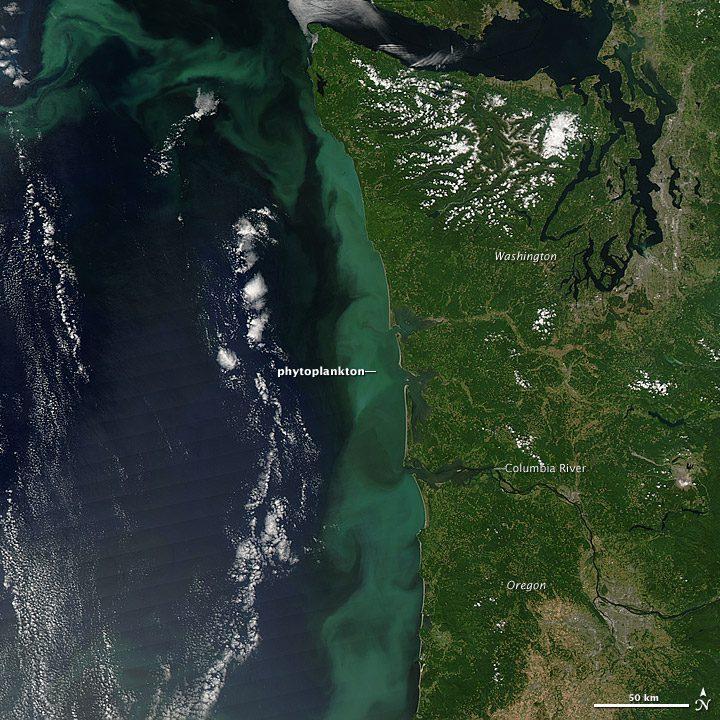 Giant Phytoplankton Bloom Hugs Pacific Northwest Coast