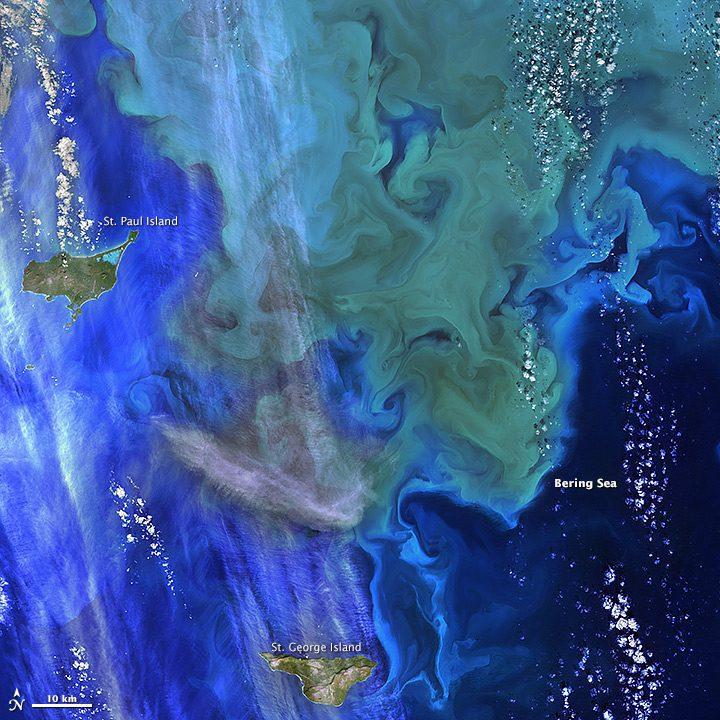 phytoplankton_Landsat8