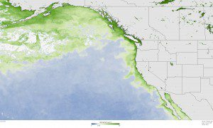 The darkest green areas have the highest surface chlorophyll concentrations and the largest amounts of phytoplankton—including both toxic and harmless species. (Credit: NOAA Climate.gov map based on Suomi NPP satellite data provided by NOAA View)