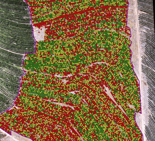 Intelescope Solutions assesses the inventories of commercial timber farms using machine-learning algorithms and DigitalGlobe satellite imagery.