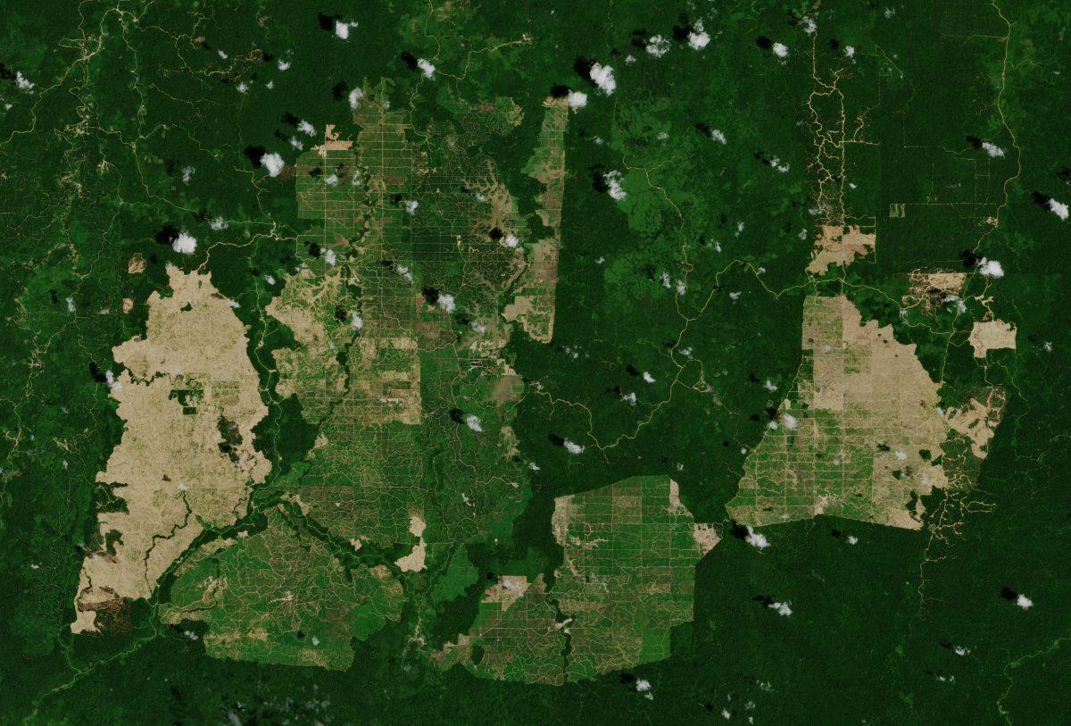 Palm_oil_plantations-e1563900573894